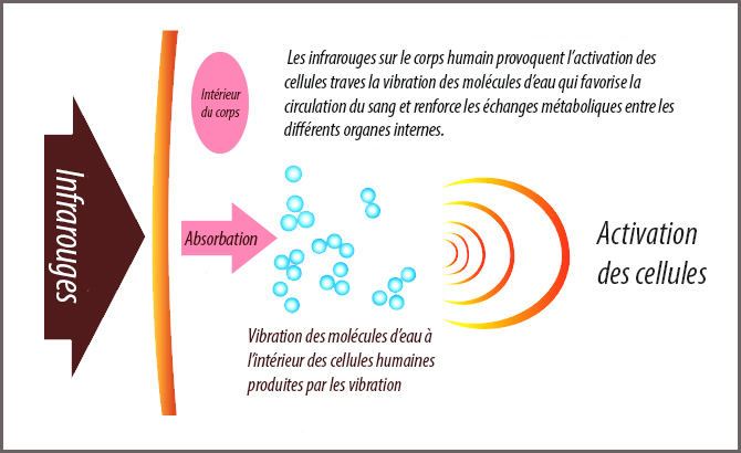 Action des rayons infrarouges sur le corps
